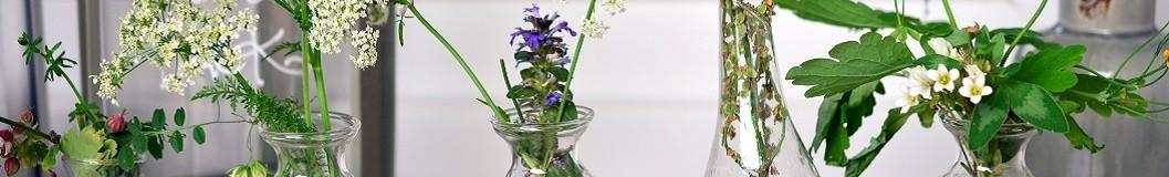 Herboristería - Proser Pharma Tu Tienda Bio
